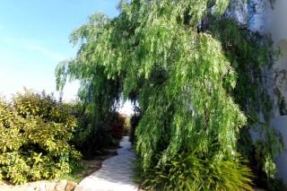 gallery valena mare garden